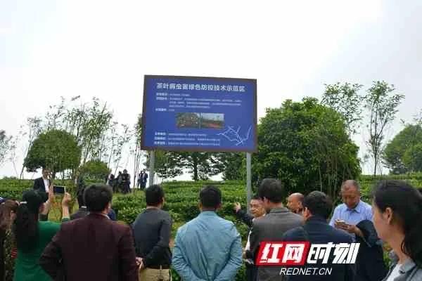 """湖湘茶农要注意了!""""史上最严""""农残新国标正式实施"""